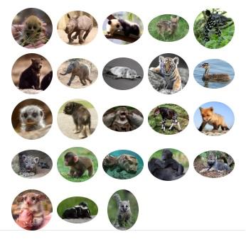 Animals Babies